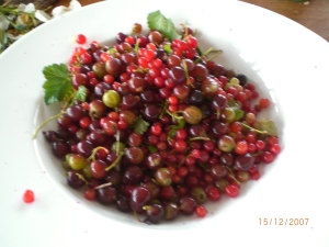 Mixed berry plate including jostaberries, harvested at Icy Creek, December 2007