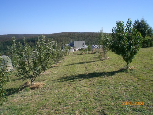 The lower and middle rows of the orchard paddock