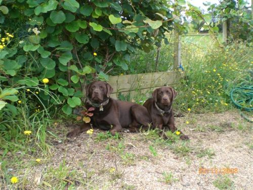 Moose and Elka under the kiwifruit vine