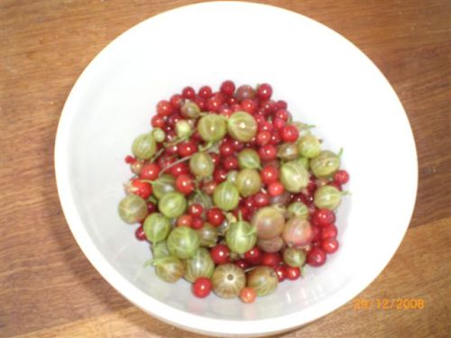 These redcurrants and gooseberries share a common destiny