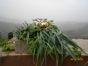 Even too wet for a leek